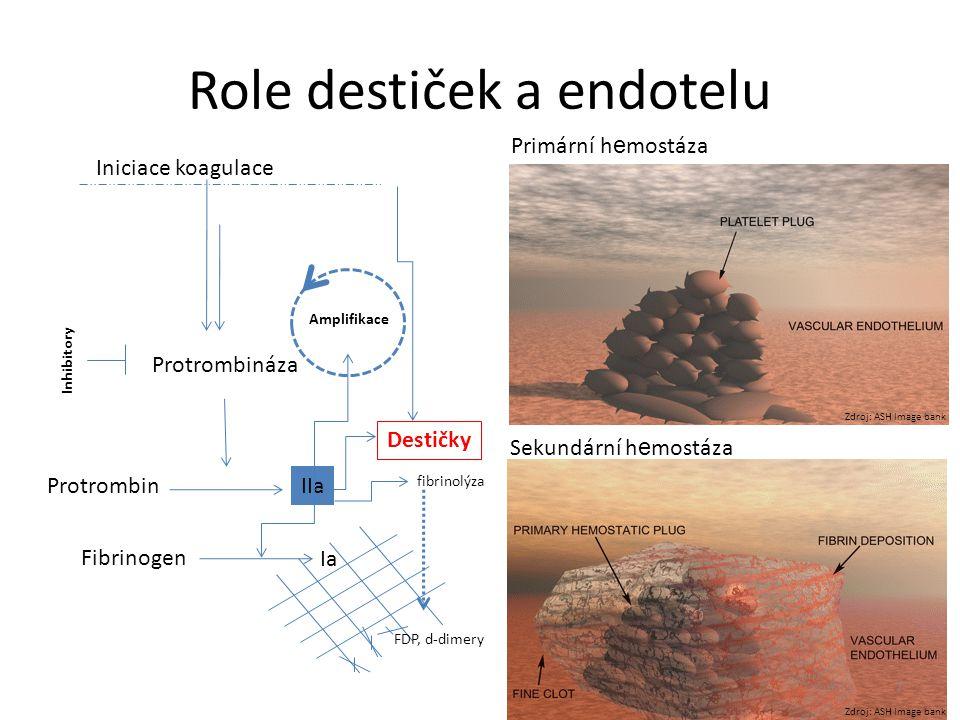 Role destiček a endotelu Iniciace koagulace Inhibitory ProtrombinIIa Fibrinogen Ia Destičky Amplifikace Protrombináza fibrinolýza FDP, d-dimery Primár