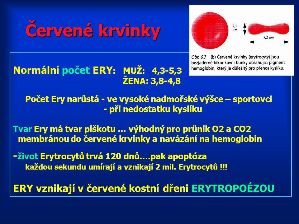 Červené krvinky Normální počet ERY : MUŽ: 4,3-5,3 ŽENA: 3,8-4,8 Počet Ery narůstá - ve vysoké nadmořské výšce – sportovci - při nedostatku kyslíku Tvar Ery má tvar piškotu … výhodný pro průnik O2 a CO2 membránou do červené krvinky a navázání na hemoglobin - život Erytrocytů trvá 120 dnů….pak apoptóza každou sekundu umírají a vznikají 2 mil.