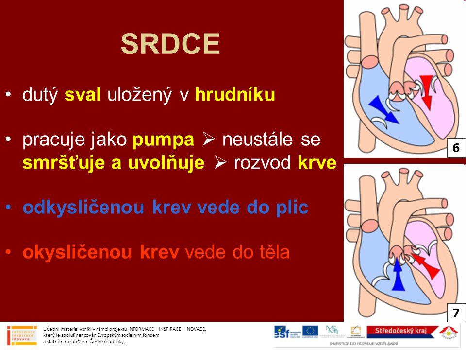 SRDCE dutý sval uložený v hrudníku pracuje jako pumpa  neustále se smršťuje a uvolňuje  rozvod krve odkysličenou krev vede do plic okysličenou krev