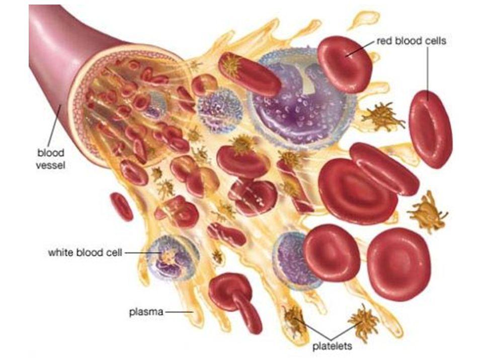 KROUŽKOVCI  uzavřená cévní soustava  2 cévy: břišní a hřbetní, hřbetní céva tepe - plní funkci srdce  cévy jsou v každém článku propojeny postranními cévami, které v předních článcích vytváří pomocná srdce, a dále se větví v dýchací oběh