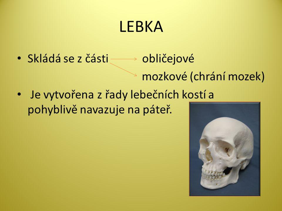 LEBKA Skládá se z části obličejové mozkové (chrání mozek) Je vytvořena z řady lebečních kostí a pohyblivě navazuje na páteř.