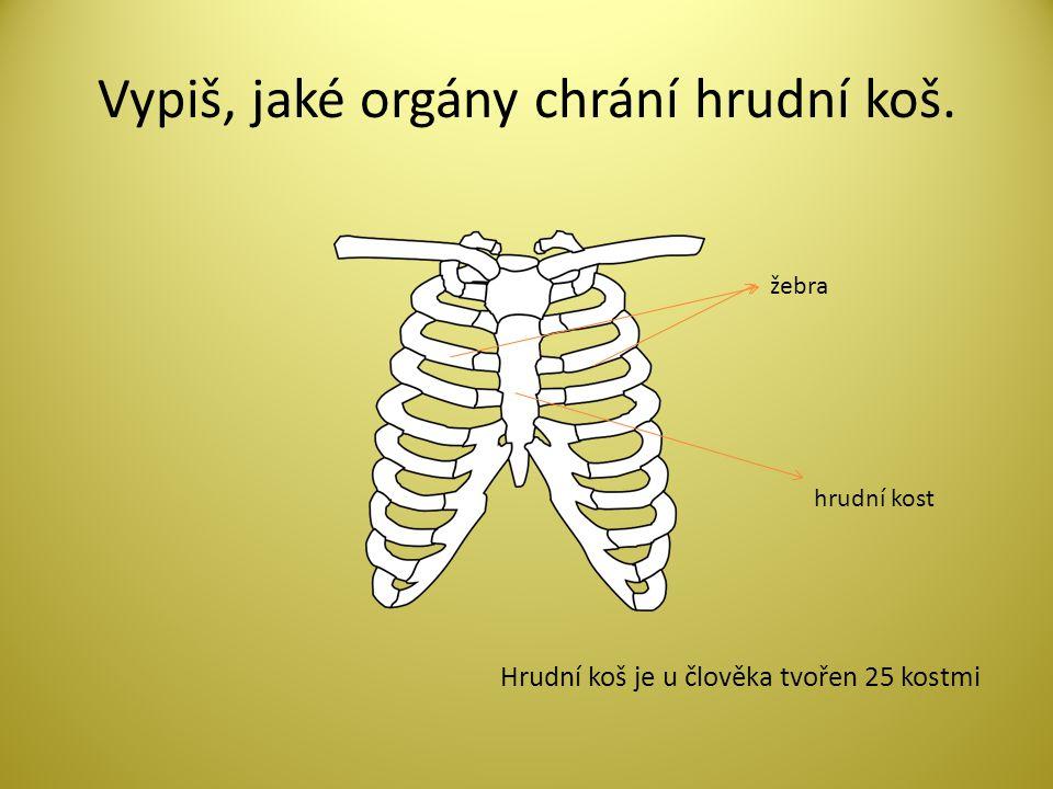 Vypiš, jaké orgány chrání hrudní koš. žebra hrudní kost Hrudní koš je u člověka tvořen 25 kostmi