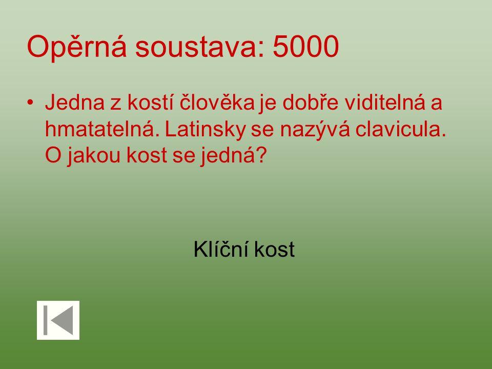 Opěrná soustava: 5000 Jedna z kostí člověka je dobře viditelná a hmatatelná. Latinsky se nazývá clavicula. O jakou kost se jedná? Klíční kost