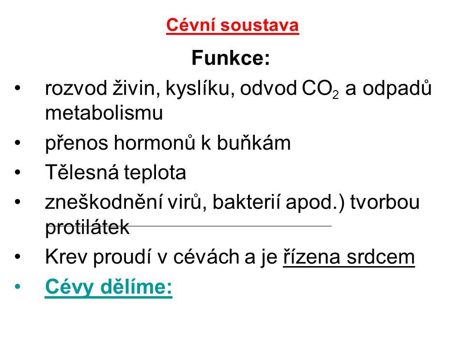 Cévní soustava Funkce: rozvod živin, kyslíku, odvod CO 2 a odpadů metabolismu přenos hormonů k buňkám Tělesná teplota zneškodnění virů, bakterií apod.