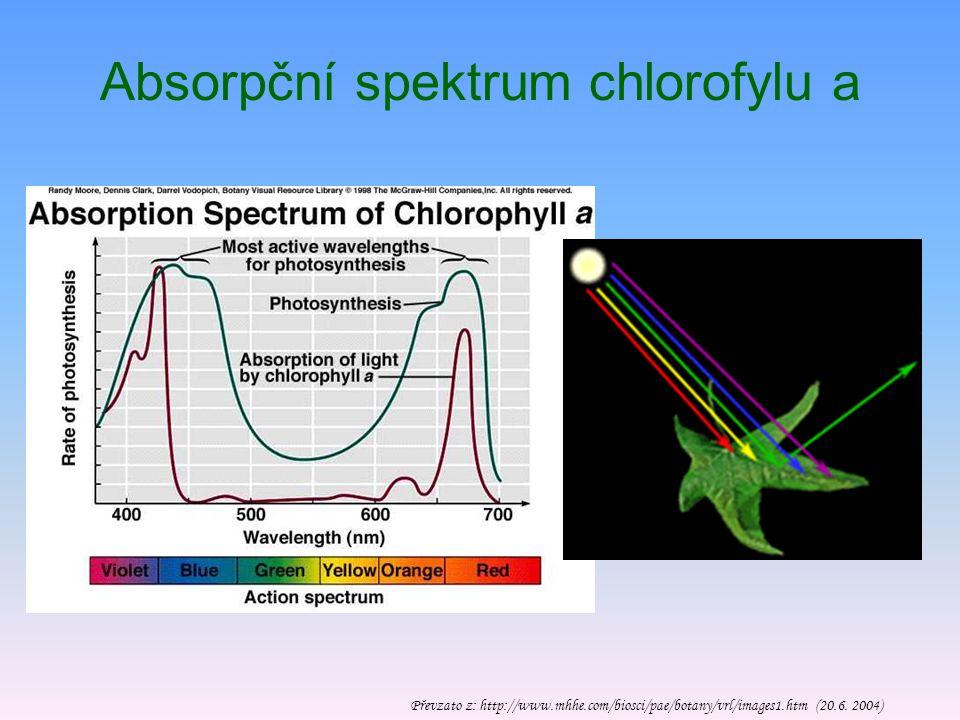 Chlorofyly Absorbují fotony v modré a červené oblasti spektra, proto se jeví zeleně Tvořeny porfinovým skeletem, v jehož centru je atom Mg, a fytolem