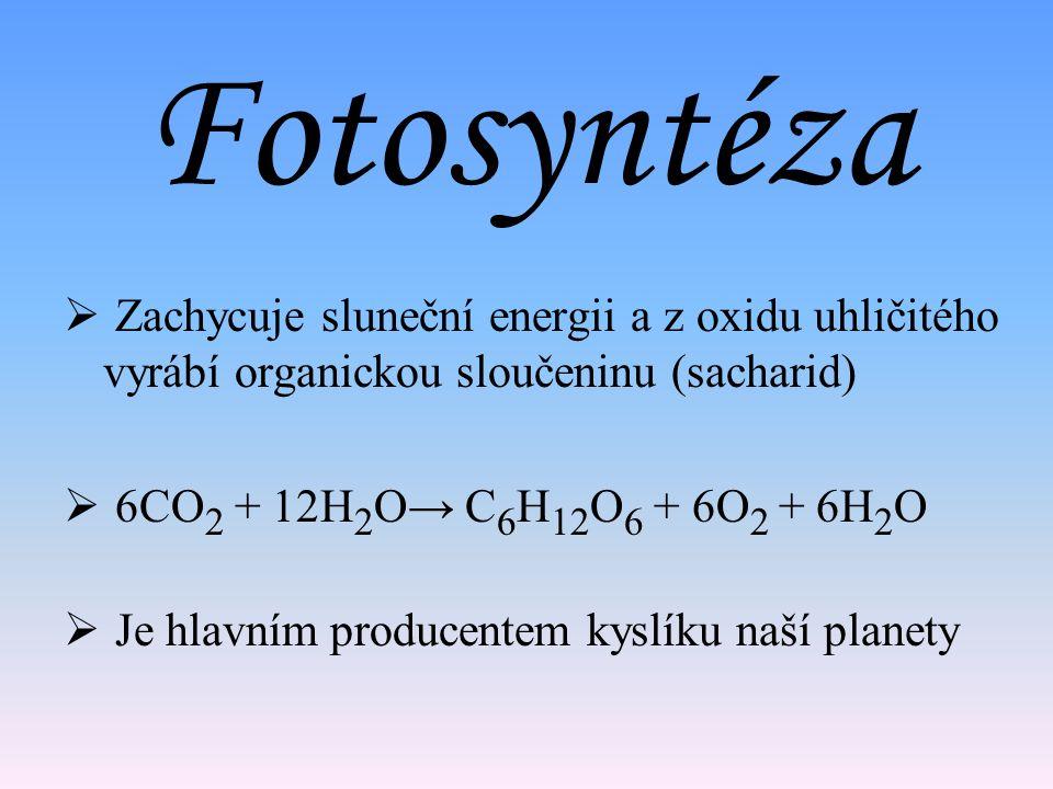 Fotosyntéza  Zachycuje sluneční energii a z oxidu uhličitého vyrábí organickou sloučeninu (sacharid)  6CO 2 + 12H 2 O→ C 6 H 12 O 6 + 6O 2 + 6H 2 O  Je hlavním producentem kyslíku naší planety