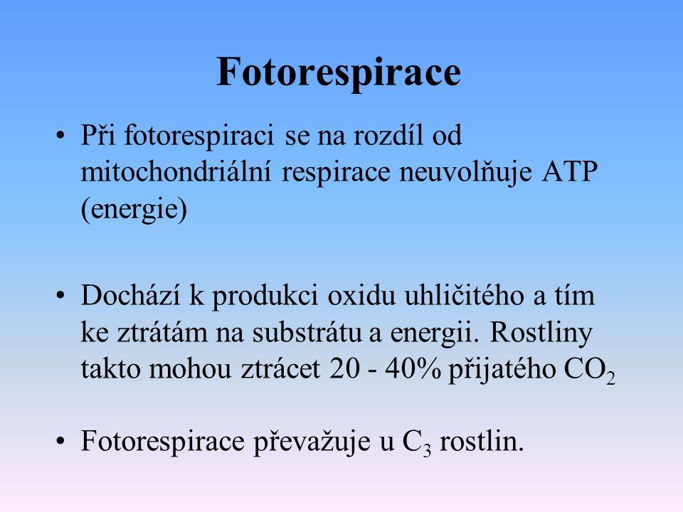 Fotorespirace světelné dýchání rostlin proces opačný k fotosyntéze Probíhá na světle Rostlina při něm přijímá kyslík a produkuje CO 2