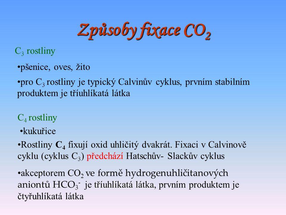Fotorespirace Při fotorespiraci se na rozdíl od mitochondriální respirace neuvolňuje ATP (energie) Dochází k produkci oxidu uhličitého a tím ke ztrátá