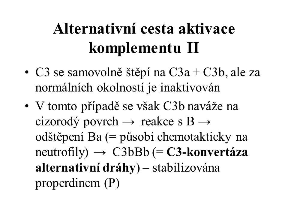 Alternativní cesta aktivace komplementu II C3 se samovolně štěpí na C3a + C3b, ale za normálních okolností je inaktivován V tomto případě se však C3b naváže na cizorodý povrch → reakce s B → odštěpení Ba (= působí chemotakticky na neutrofily) → C3bBb (= C3-konvertáza alternativní dráhy) – stabilizována properdinem (P)