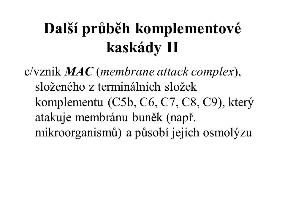 Další průběh komplementové kaskády II c/vznik MAC (membrane attack complex), složeného z terminálních složek komplementu (C5b, C6, C7, C8, C9), který atakuje membránu buněk (např.
