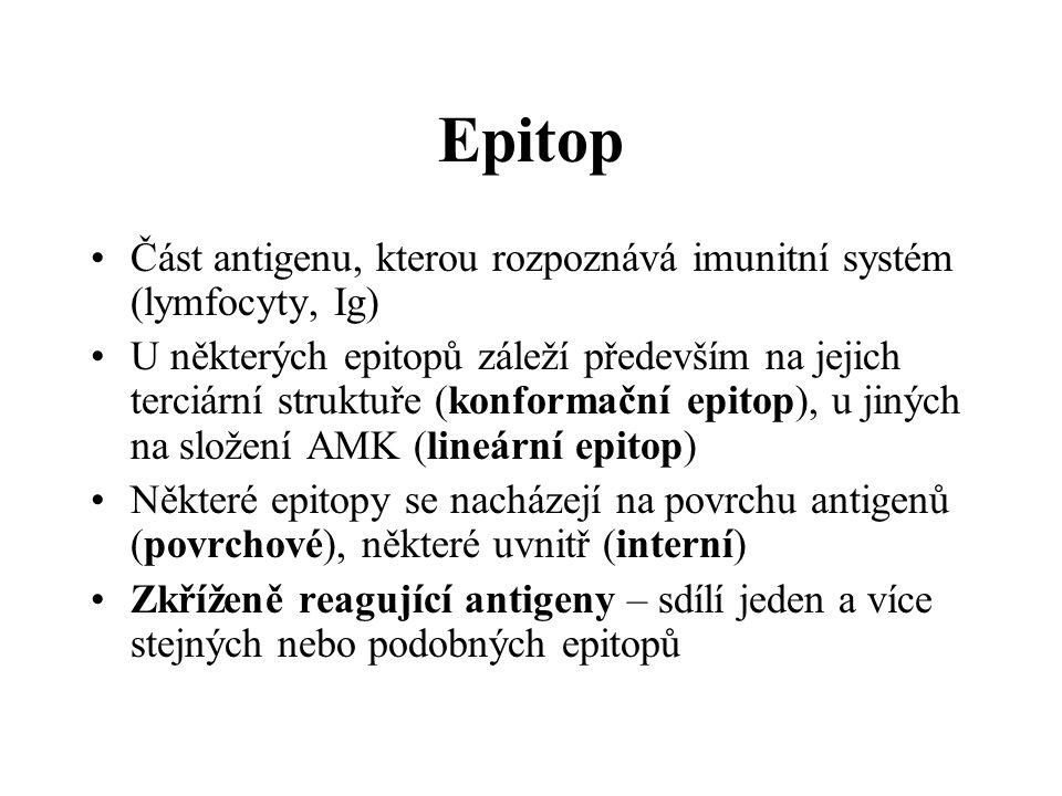 Epitop Část antigenu, kterou rozpoznává imunitní systém (lymfocyty, Ig) U některých epitopů záleží především na jejich terciární struktuře (konformační epitop), u jiných na složení AMK (lineární epitop) Některé epitopy se nacházejí na povrchu antigenů (povrchové), některé uvnitř (interní) Zkříženě reagující antigeny – sdílí jeden a více stejných nebo podobných epitopů