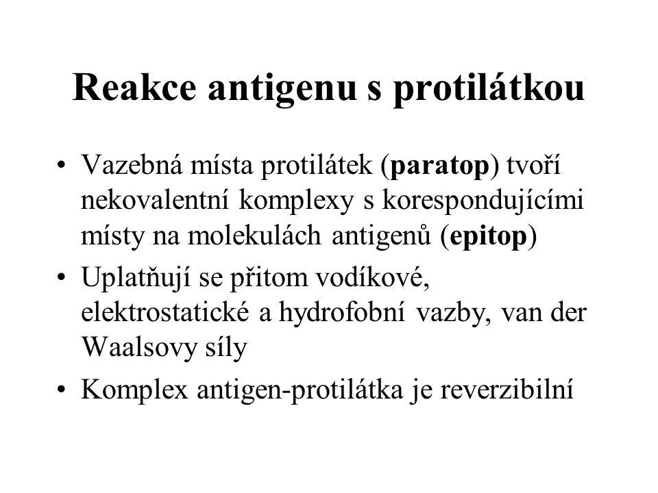 Reakce antigenu s protilátkou Vazebná místa protilátek (paratop) tvoří nekovalentní komplexy s korespondujícími místy na molekulách antigenů (epitop) Uplatňují se přitom vodíkové, elektrostatické a hydrofobní vazby, van der Waalsovy síly Komplex antigen-protilátka je reverzibilní
