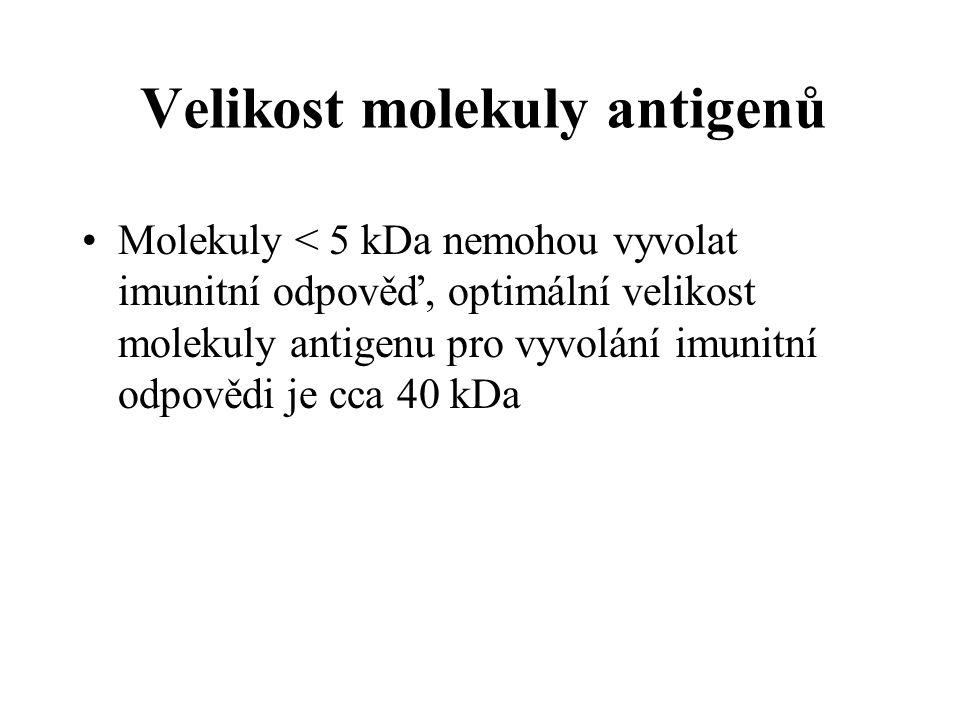 Velikost molekuly antigenů Molekuly < 5 kDa nemohou vyvolat imunitní odpověď, optimální velikost molekuly antigenu pro vyvolání imunitní odpovědi je cca 40 kDa