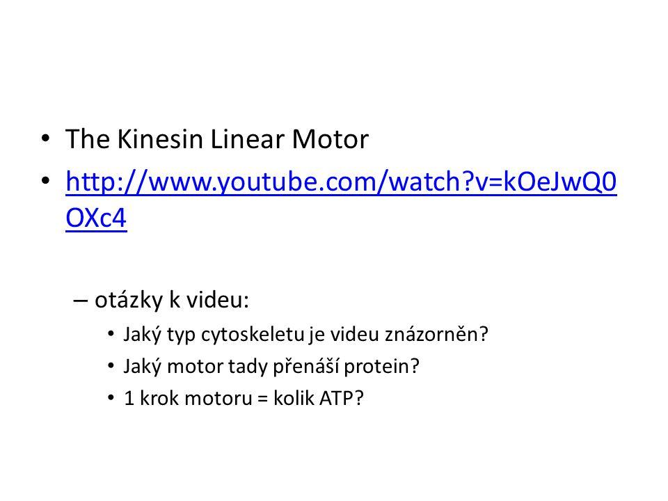 The Kinesin Linear Motor http://www.youtube.com/watch?v=kOeJwQ0 OXc4 http://www.youtube.com/watch?v=kOeJwQ0 OXc4 – otázky k videu: Jaký typ cytoskelet