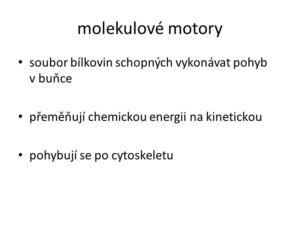 molekulové motory soubor bílkovin schopných vykonávat pohyb v buňce přeměňují chemickou energii na kinetickou pohybují se po cytoskeletu