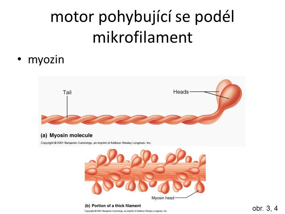The Kinesin Linear Motor http://www.youtube.com/watch?v=kOeJwQ0 OXc4 http://www.youtube.com/watch?v=kOeJwQ0 OXc4 – otázky k videu: Jaký typ cytoskeletu je videu znázorněn.