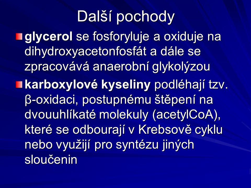 Další pochody glycerol se fosforyluje a oxiduje na dihydroxyacetonfosfát a dále se zpracovává anaerobní glykolýzou karboxylové kyseliny podléhají tzv.