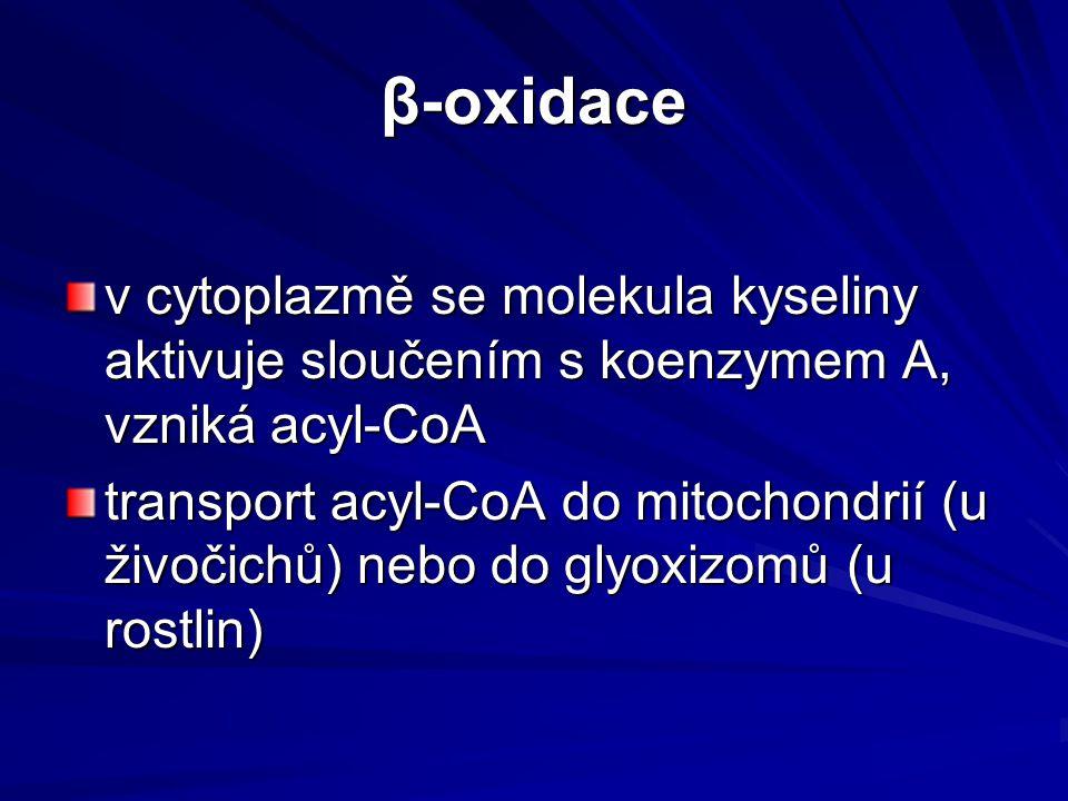 β-oxidace v cytoplazmě se molekula kyseliny aktivuje sloučením s koenzymem A, vzniká acyl-CoA transport acyl-CoA do mitochondrií (u živočichů) nebo do