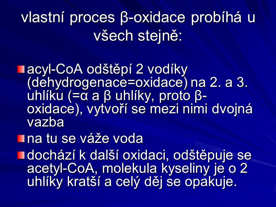 vlastní proces β-oxidace probíhá u všech stejně: acyl-CoA odštěpí 2 vodíky (dehydrogenace=oxidace) na 2. a 3. uhlíku (=α a β uhlíky, proto β- oxidace)