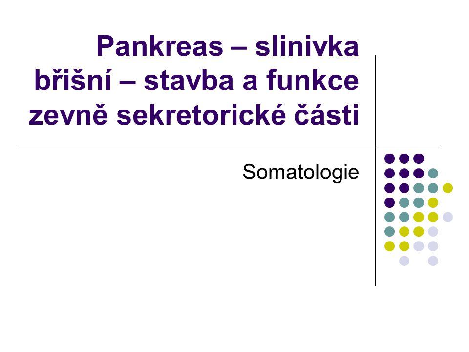 Pankreas – slinivka břišní – stavba a funkce zevně sekretorické části Somatologie