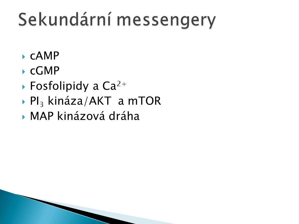  cAMP  cGMP  Fosfolipidy a Ca 2+  PI 3 kináza/AKT a mTOR  MAP kinázová dráha