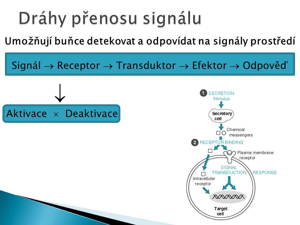 Umožňují buňce detekovat a odpovídat na signály prostředí Signál  Receptor  Transduktor  Efektor  Odpověď  Aktivace  Deaktivace