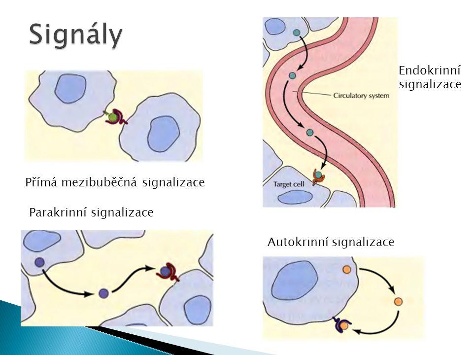 Přímá mezibuběčná signalizace Endokrinní signalizace Parakrinní signalizace Autokrinní signalizace