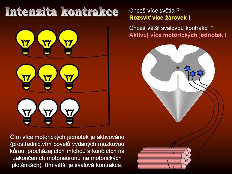 Chceš více světla ? Rozsviť více žárovek ! Chceš větší svalovou kontrakci ? Aktivuj více motorických jednotek ! Čím více motorických jednotek je aktiv