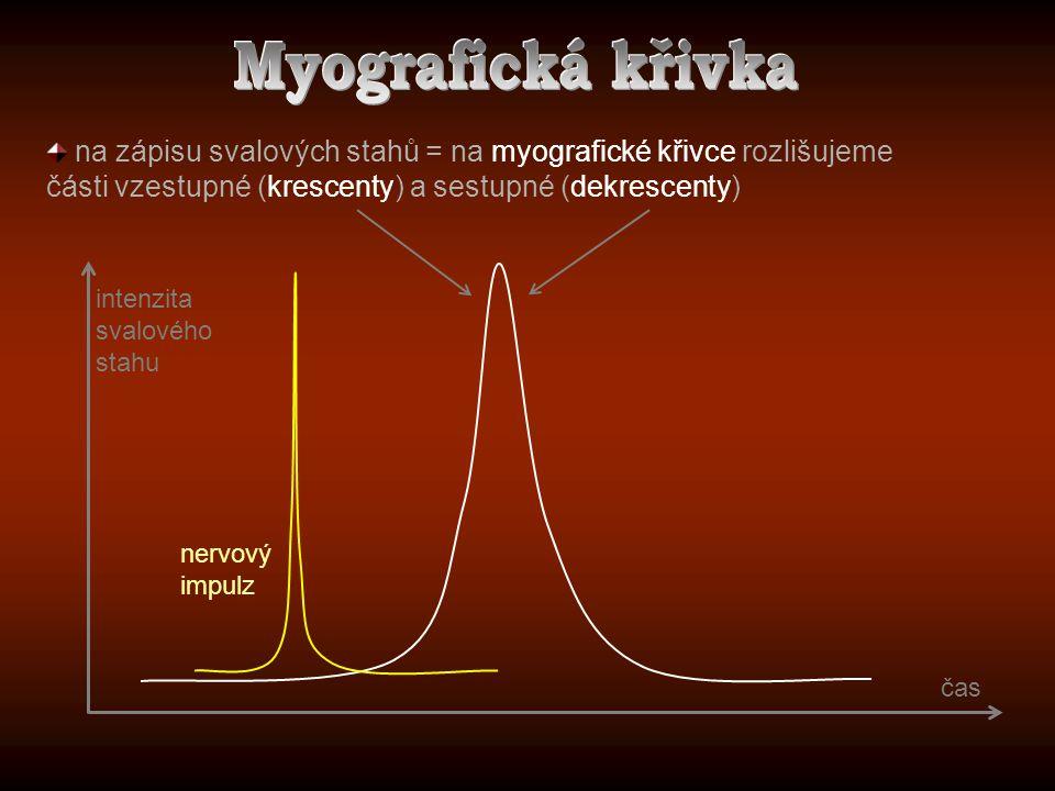 na zápisu svalových stahů = na myografické křivce rozlišujeme části vzestupné (krescenty) a sestupné (dekrescenty) nervový impulz intenzita svalového