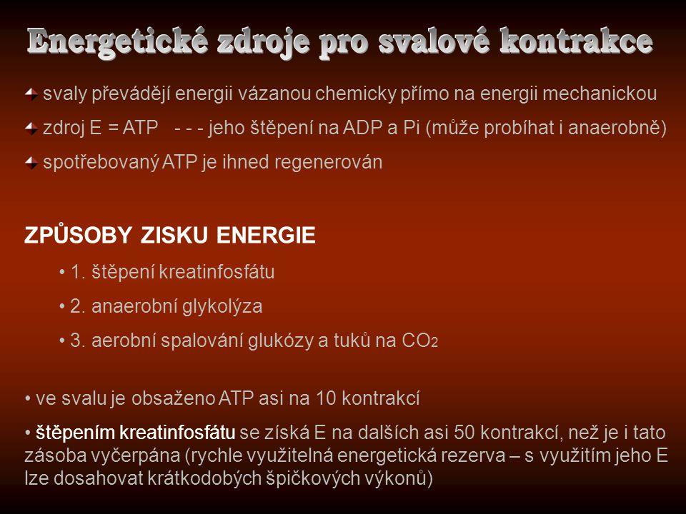 svaly převádějí energii vázanou chemicky přímo na energii mechanickou zdroj E = ATP - - - jeho štěpení na ADP a Pi (může probíhat i anaerobně) spotřeb