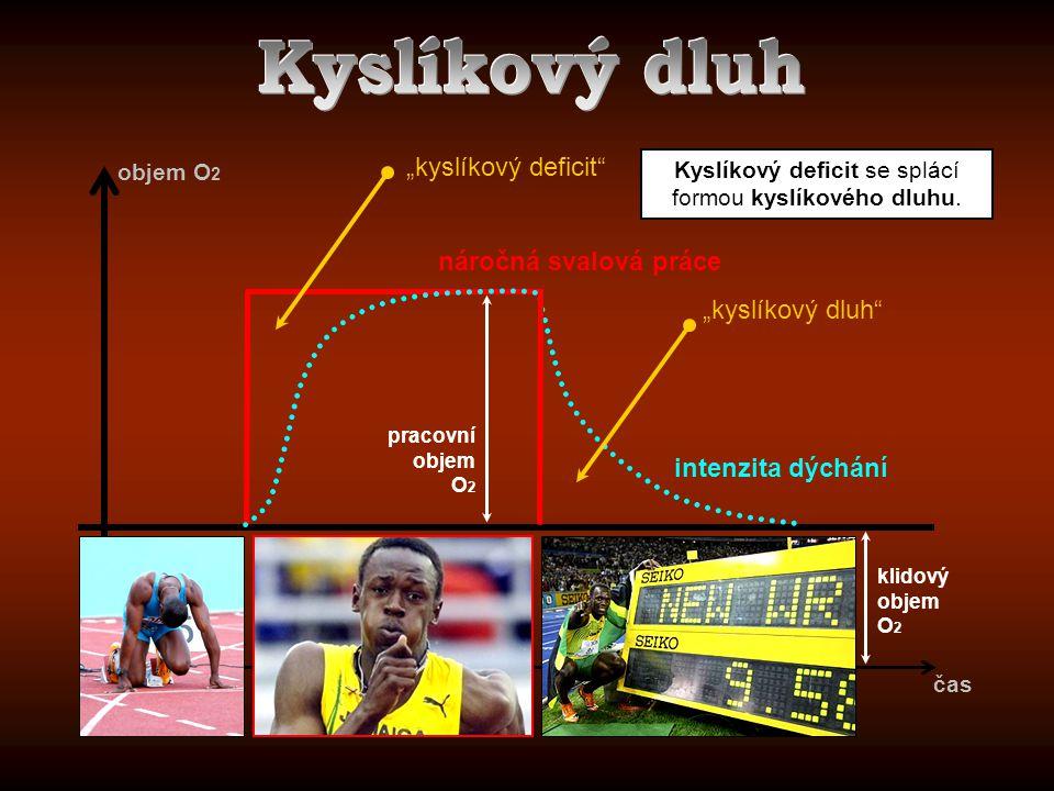 """klidový objem O 2 pracovní objem O 2 čas objem O 2 """"kyslíkový deficit"""" """"kyslíkový dluh"""" intenzita dýchání náročná svalová práce Kyslíkový deficit se s"""