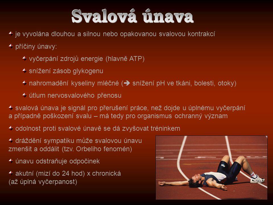 je vyvolána dlouhou a silnou nebo opakovanou svalovou kontrakcí příčiny únavy: vyčerpání zdrojů energie (hlavně ATP) snížení zásob glykogenu nahromadě