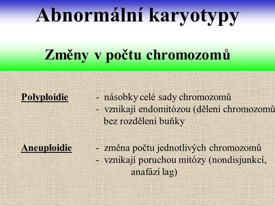 Polyploidie - násobky celé sady chromozomů - vznikají endomitózou (dělení chromozomů bez rozdělení buňky Změny v počtu chromozomů Abnormální karyotypy