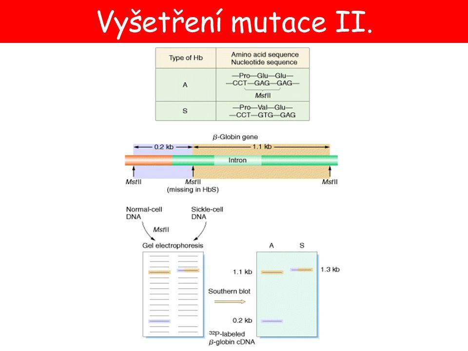 Vyšetření mutace II.