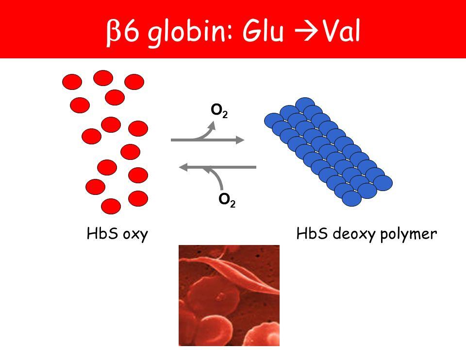 HbS deoxy polymerHbS oxy  6 globin: Glu  Val O2O2 O2O2