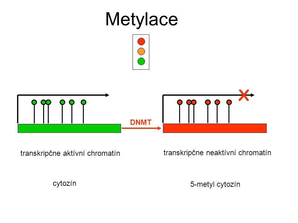 X Metylace transkripčne aktívní chromatín transkripčne neaktívní chromatín DNMT cytozín 5-metyl cytozín
