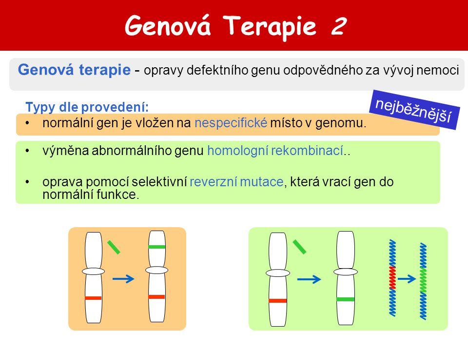 nejběžnější Genová Terapie 2 Typy dle provedení: normální gen je vložen na nespecifické místo v genomu.. výměna abnormálního genu homologní rekombinac
