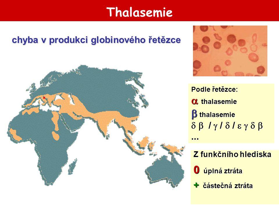Thalasemie Podle řetězce:  thalasemie  thalasemie   /  /  /    ... Z funkčního hlediska 0 úplná ztráta + částečná ztráta chyba v produkci gl