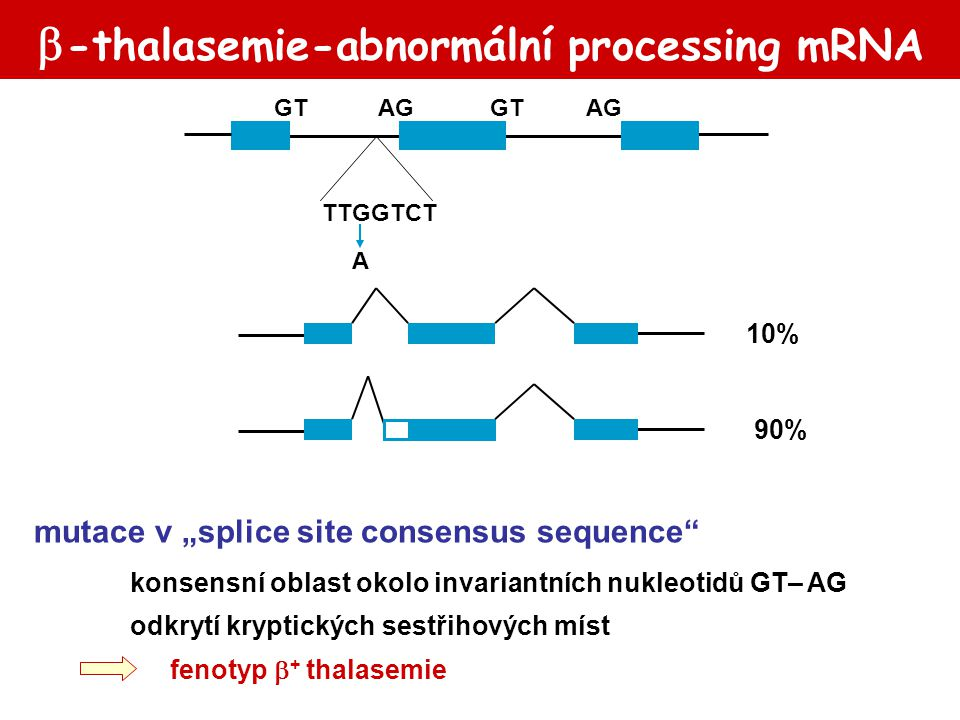 """ -thalasemie-abnormální processing mRNA 10% 90% GTAGGTAG TTGGTCT A mutace v """"splice site consensus sequence"""" konsensní oblast okolo invariantních nuk"""
