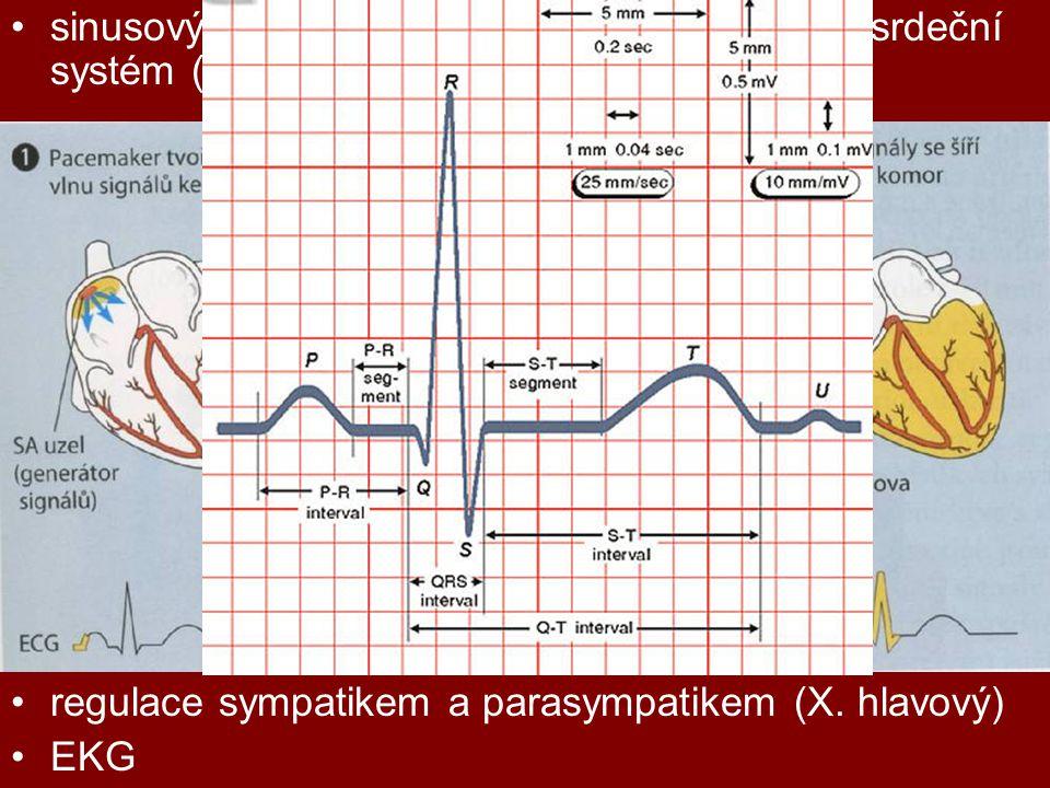 sinusový uzlík, síňokomorový uzlík, převodní srdeční systém (Hisův svazek, Purkyňova vlákna) regulace sympatikem a parasympatikem (X. hlavový) EKG