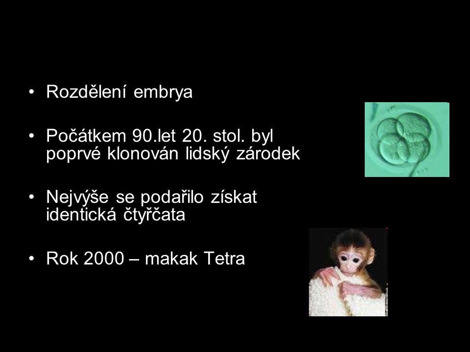 Rozdělení embrya Počátkem 90.let 20. stol.