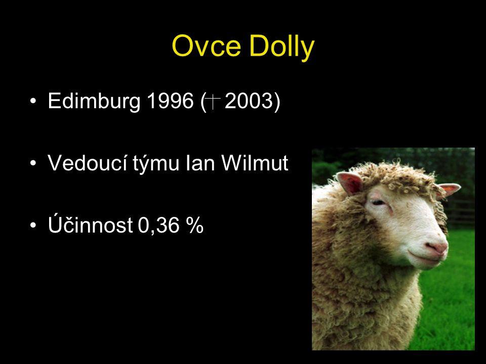 Ovce Dolly Edimburg 1996 ( 2003) Vedoucí týmu Ian Wilmut Účinnost 0,36 %