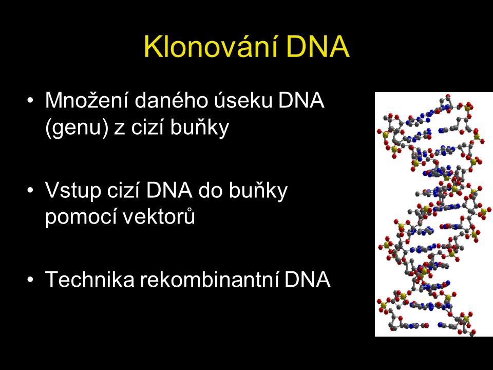 Klonování DNA Množení daného úseku DNA (genu) z cizí buňky Vstup cizí DNA do buňky pomocí vektorů Technika rekombinantní DNA