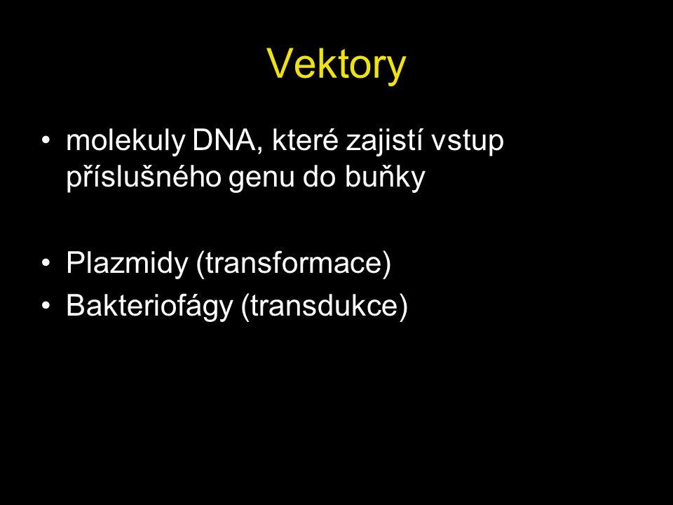 Vektory molekuly DNA, které zajistí vstup příslušného genu do buňky Plazmidy (transformace) Bakteriofágy (transdukce)