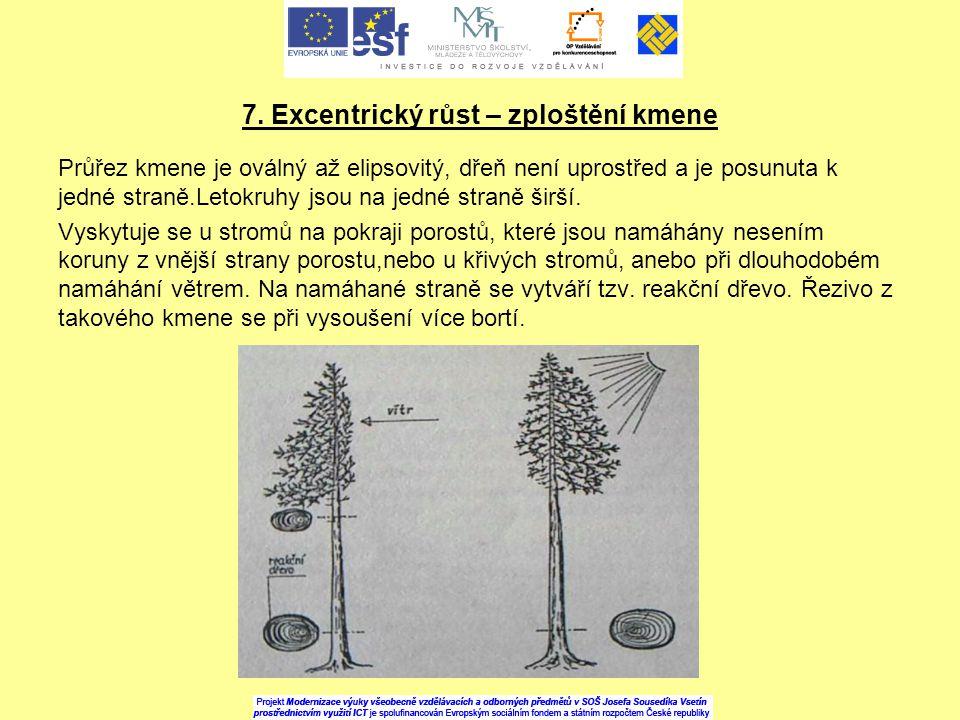 7. Excentrický růst – zploštění kmene Průřez kmene je oválný až elipsovitý, dřeň není uprostřed a je posunuta k jedné straně.Letokruhy jsou na jedné s