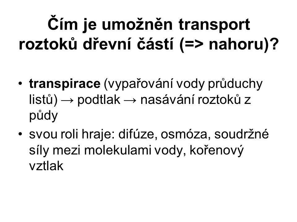 Čím je umožněn transport roztoků dřevní částí (=> nahoru)? transpirace (vypařování vody průduchy listů) → podtlak → nasávání roztoků z půdy svou roli