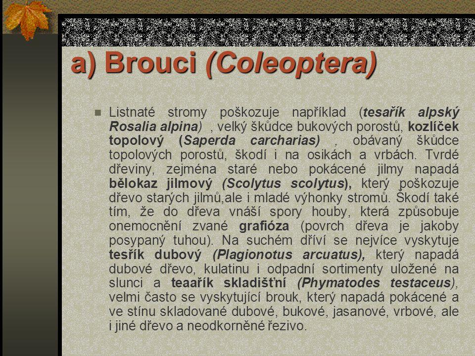 a) Brouci (Coleoptera) Tesaříci tvoří velkou čeleď brouků s mnohými rody a druhy, z nichž některé napadají živé stromy, jiné čerstvě pokácené dříví, s