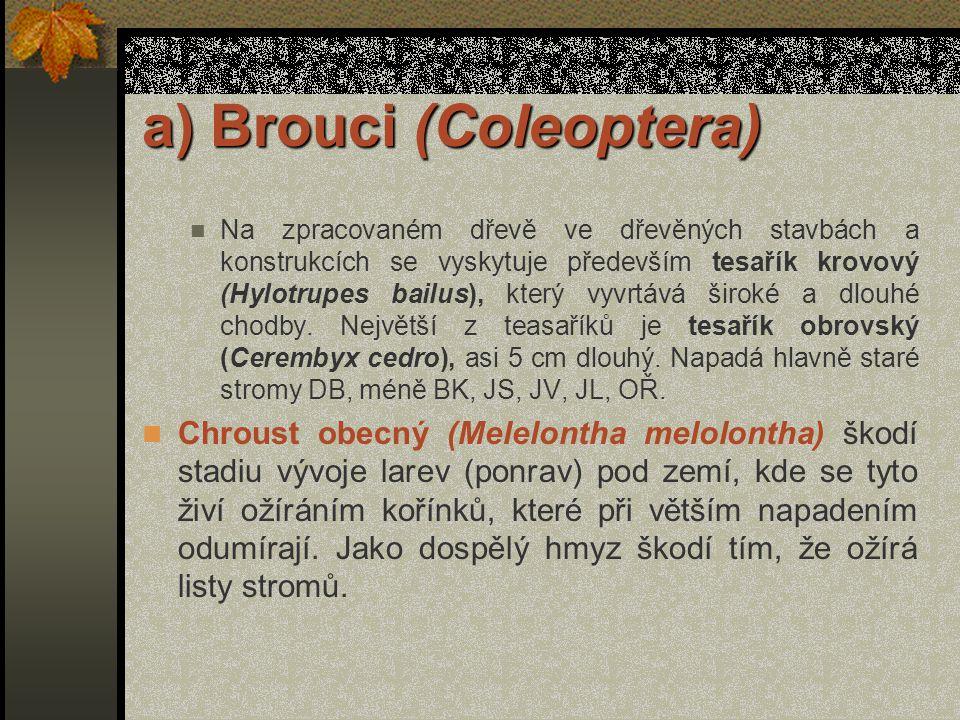 a) Brouci (Coleoptera) Listnaté stromy poškozuje například (tesařík alpský Rosalia alpina), velký škůdce bukových porostů, kozlíček topolový (Saperda