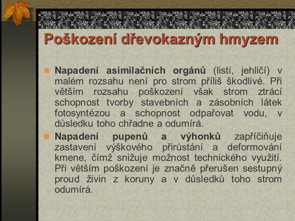 c)Motýli (Lepidoptera) Škodí hlavně fyziologicky – ničí listy, ale některé druhy i technicky požíráním dřeva.