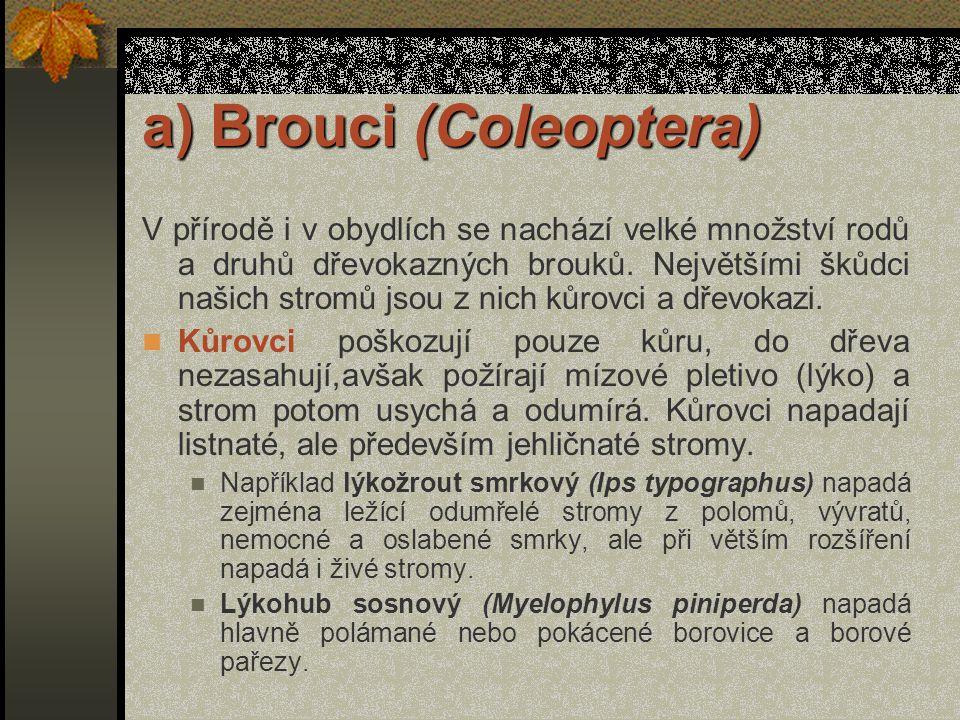 a) Brouci (Coleoptera) V přírodě i v obydlích se nachází velké množství rodů a druhů dřevokazných brouků.